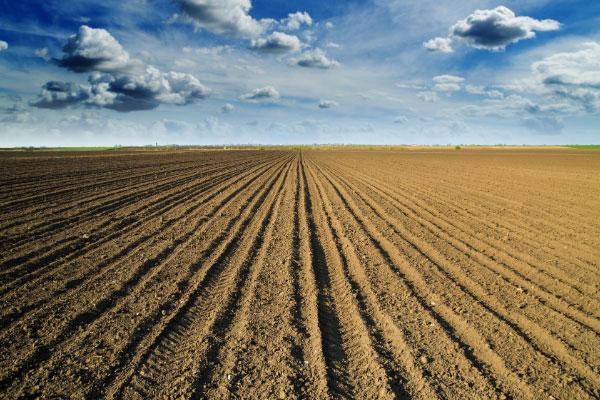 Nawożenie zbóż ozimych jesienią w technologii Elvita